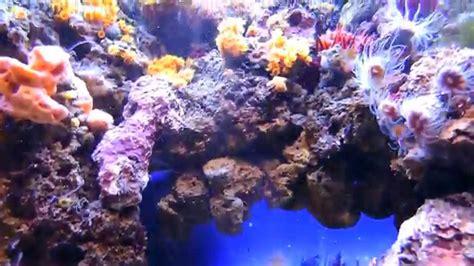 vasca acquario marino acquario marino mediterraneo vasca coralligeno