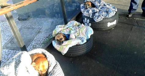 Dogfood Birbo Brazil una estaci 243 n de autobuses de brasil monta camas para que unos perros que viven en la calle no