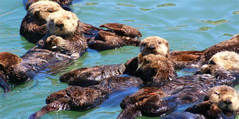 fishing boat sea otter morro bay sea otter viewing outdoor project