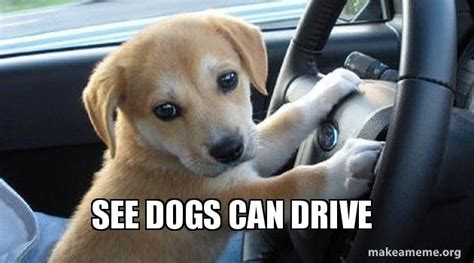when can puppies see see dogs can drive make a meme