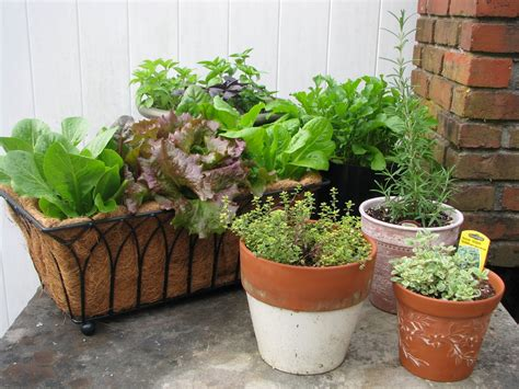Herb Garden Planter Container by Desperate Gardener Easy Container Gardening Combining