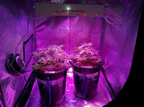 led grow lights    growing cannabis