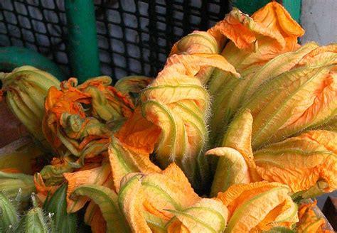 come si cucinano i fiori di zucca come si cucinano i fiori di zucca in pastella diredonna