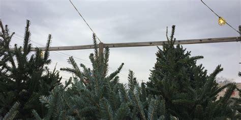 cut your own christmas tree columbus tree farms in columbus and beyond