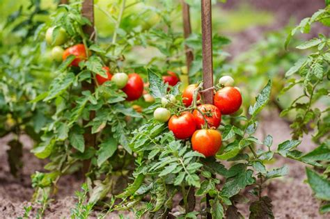 vegetables i can grow indoors 10 most productive vegetables to grow indoors total survival