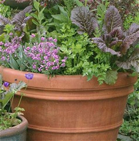 organic container gardening vegetables 42 best images about garden containers on