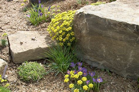 Rock Garden Fort Collins Rock Garden Alpine Plants Fort Collins Nursery