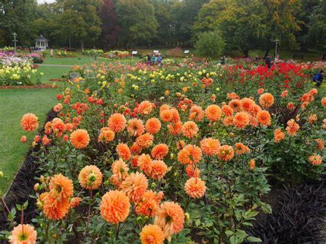Dahlienfeuer Im Britzer Garten by Lichtenrade Berlin De Dahlienfeuer 2017 Im Britzer Garten