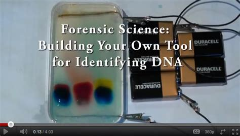 forensic science building your own tool for identifying dna new summer science fellows videos