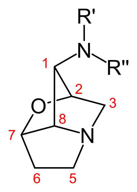 loline alkaloid wikipedia