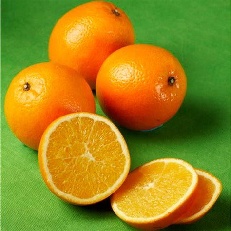 Benihbibitbiji Buah Jeruk Ponkam keunggulan buah jeruk