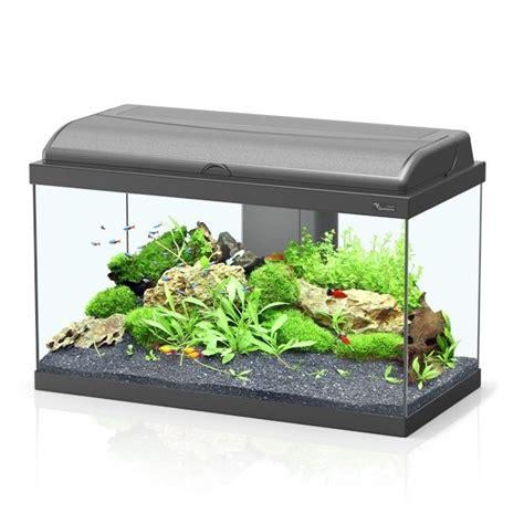 Japanese Lotus Square Plate L 15cm W 15cm H 35cm 1 aquarium sans accessoires