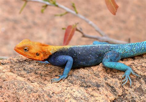 strange color names the 10 animals with strange colors