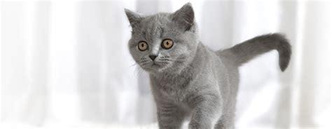 nutrizione e salute gatto chiedi al nutrizionista