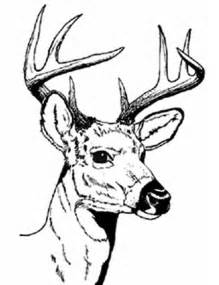 deer drawing clipart best