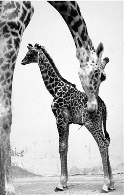 Gone But Not Forgotten: Former Animals at the National Zoo