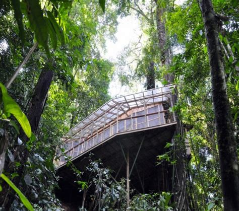 treehouse community home designs exceptional tree house in tropical forest of