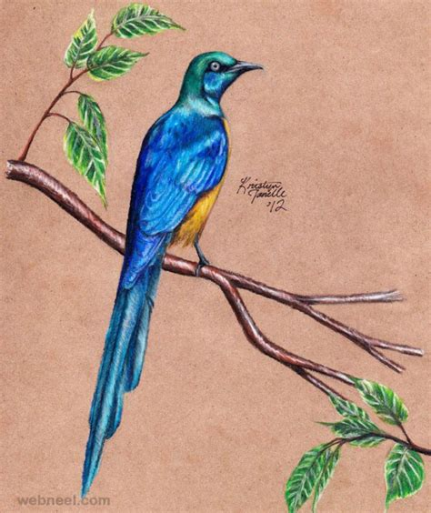 Drawing Birds by 40 Beautiful Bird Drawings And Works For Your Inspiration
