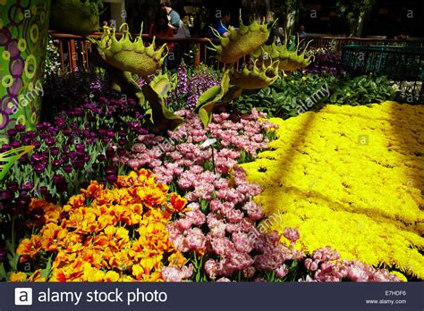 Bellagio Flower Garden Flowers In Conservatory Botanical Gardens Bellagio Las Vegas Stock Photo Royalty Free Image