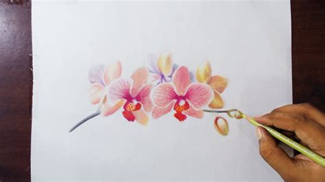 libro flowers in colored pencil 40 beautiful flower drawings and realistic color pencil drawings flower drawing tutorials