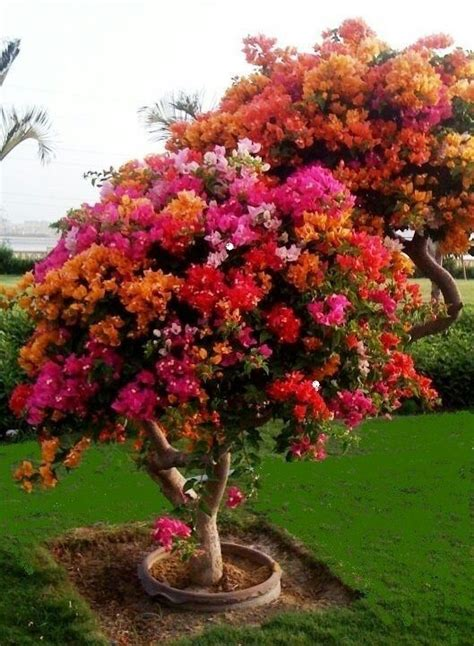 beautiful flowering tree secret garden pinterest