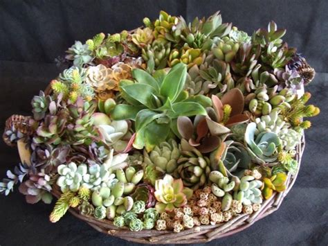 basket cuttings   garden