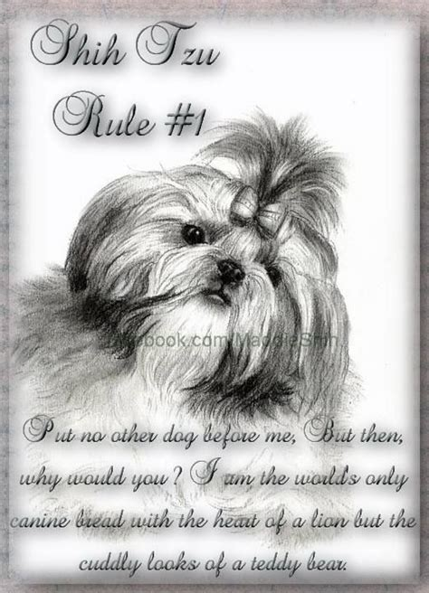 taking my shih tzu on a plane 17 best ideas about shih tzu on shih tzu puppy dogs and baby dogs