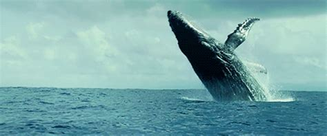 wale gif whales on tumblr