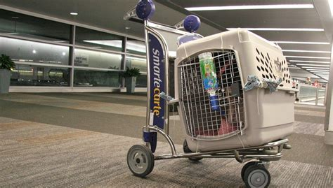 Pet Travel Cargo Best In Show flying with dogs airline approved crates and carriers