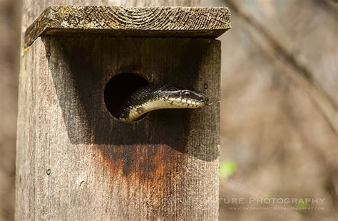 show me a picture of a house 26 best snake lizard frog turtle crabs photography images on pinterest lizards