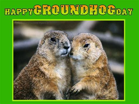 groundhog day wallpaper 25 best groundhog day pictures and images