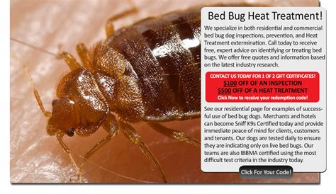 heat treatment bed bugs bed bug heat treatment massachusetts sniffk9s bed bug