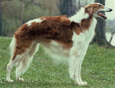 breed identification quiz breed identification proprofs quiz
