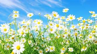 Flower Shop Definition - free spring wallpapers and screensavers wallpaper cave