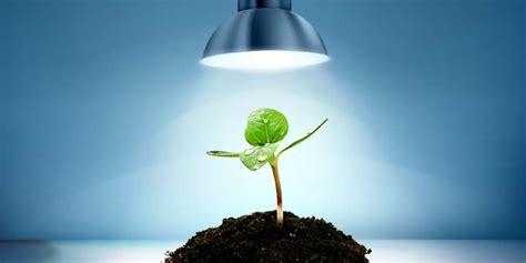 led grow lights   choice  indoor plants gardens