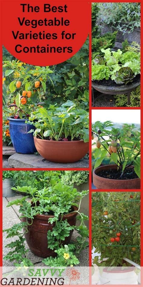 best 25 container vegetable gardening ideas on
