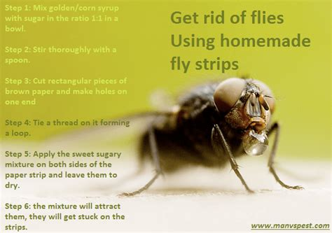 how to get rid of flies in your house house plan 2017