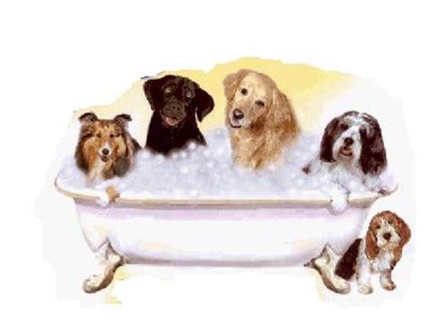 grooming denver pleasant canine grooming salon in denver colorado ec