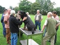 rottweiler breed council rotweilers