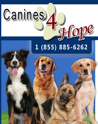 service dogs florida professional trainer florida canines 4 south florida certified trainer