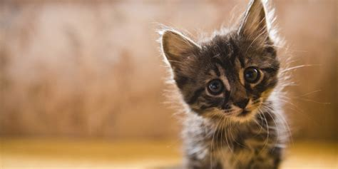 reasons  crazy cat obsession   happier