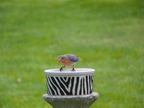 nj backyard birds backyard birds hackettstown nj gogo papa