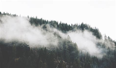bitcoin fog tutorial fog over the trees in the forest in vancouver british