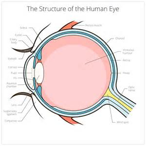 how many colors can the human eye distinguish meet one of the most impressive biotech entrepreneurs