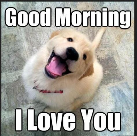 Good Morning Meme Pics - cute good morning puppy meme www imgkid com the image
