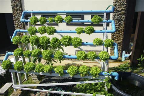 cultivos hidroponicos en casa vix