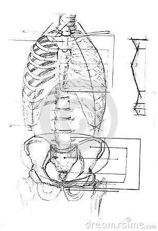 pelvic area diagram human anatomy diagram stock photography image 35247992
