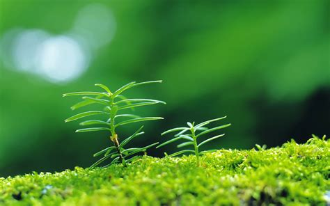 plant wallpaper moisturizing eye series sprout leaves wallpaper 10