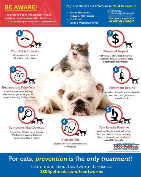 heartworm treatment does my or cat need heartworm prevention 1800petmeds 174