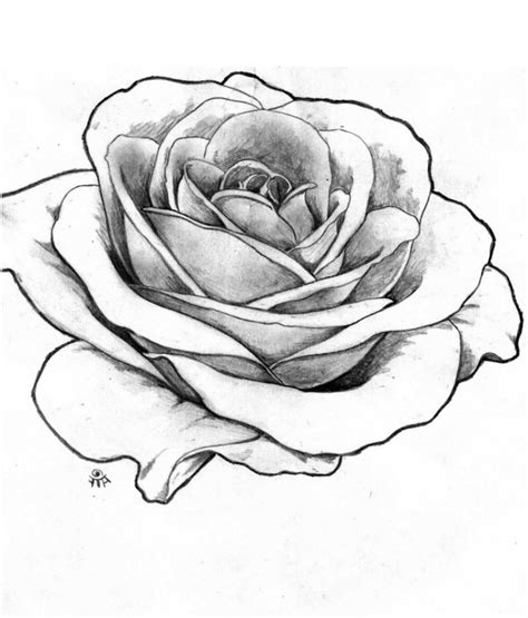realistic rose drawings 1000 images about rose on